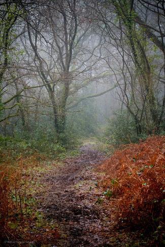 Woodland Scenery in England Valokuvavedos