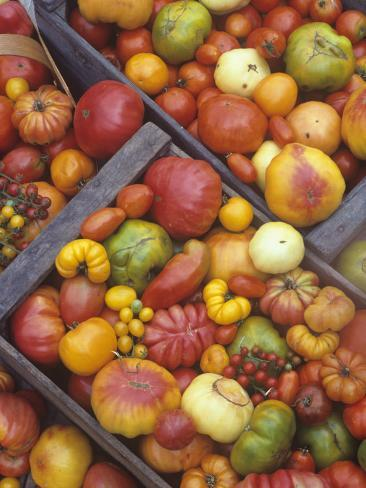 Harvest of Genetically Diverse Heirloom Tomato Varieties Photographic Print