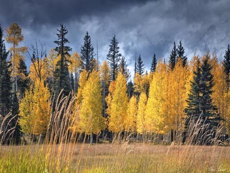 Through the Yellow Trees I Stampa fotografica