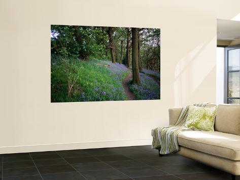 A Woodland Floor Carpeted with Bluebells-A Native Flower Unique to Britain Wall Mural