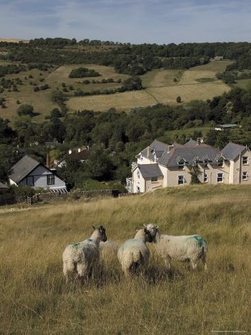 Sheep, Woodmancote Village Viewed from Cleeve Hill, the Cotswolds, Gloucestershire, England Photographic Print