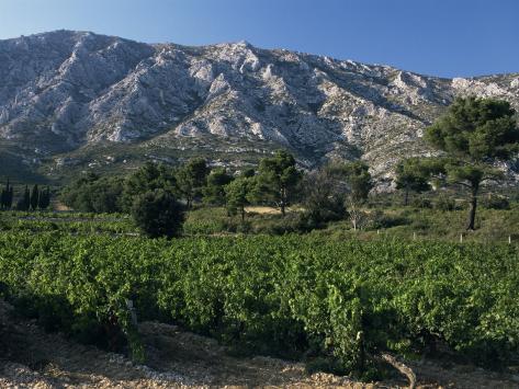 Vineyards and Montagne Ste. Victoire, Near Aix-En-Provence, Bouches-Du-Rhone, Provence, France Photographic Print