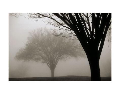 Memories of Winter Taidevedos