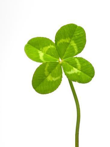オールポスターズの デイヴィッド ヌヌク four leaf clover 写真プリント
