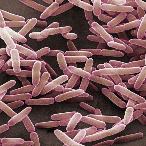オールポスターズの デイヴィッド フィリップス bacillus subtilis is