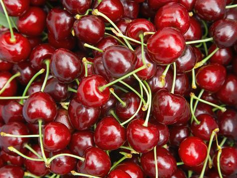 Cherries, Ripponvale, near Cromwell, Central Otago, South Island, New Zealand Photographic Print
