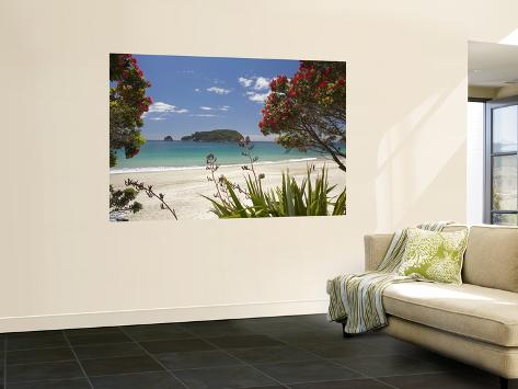 Pohutukawa Tree in Bloom and Hahei, Coromandel Peninsula, North Island, New Zealand Wall Mural