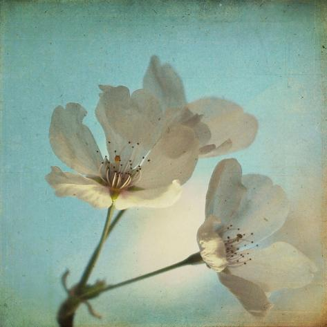 Spring Sings Stampa fotografica