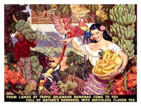 Bananas, From Lands of Tropical Splendor Giclee Print