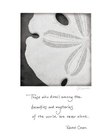 Sand Dollar Art Print