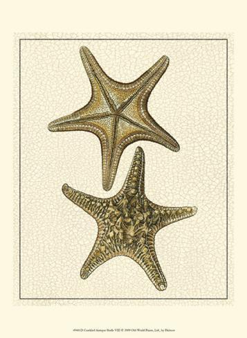 Crackled Antique Shells VIII Art Print