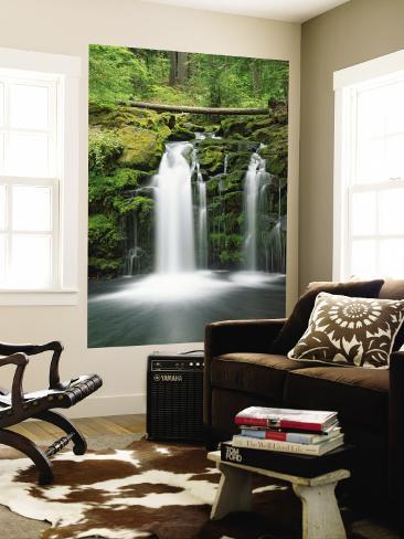 View of Whitehorse Falls, Umpqua National Forest, Oregon, USA Wall Mural