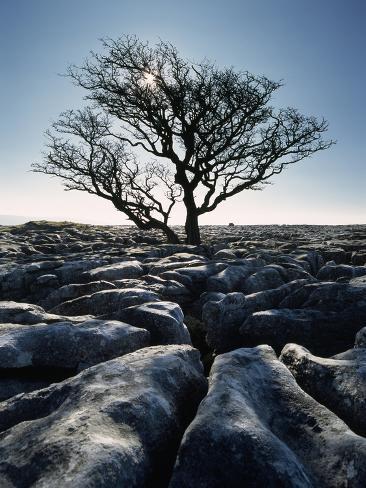 Limestone Pavement at Twisleton Scars, Yorkshire Dales National Park,North Yorkshire,England,Uk Photographic Print