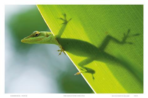 Here's Looking at You Kid, Hawaiian Green Gecko Art Print