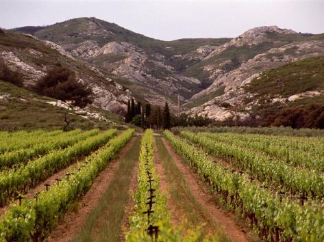 vineyard and typical alpilles landscape near mausanne provence alpes cote d 39 azur france. Black Bedroom Furniture Sets. Home Design Ideas