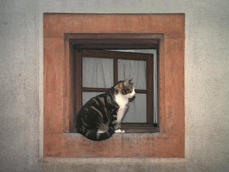Cat Sitting on a Window Ledge Photographic Print