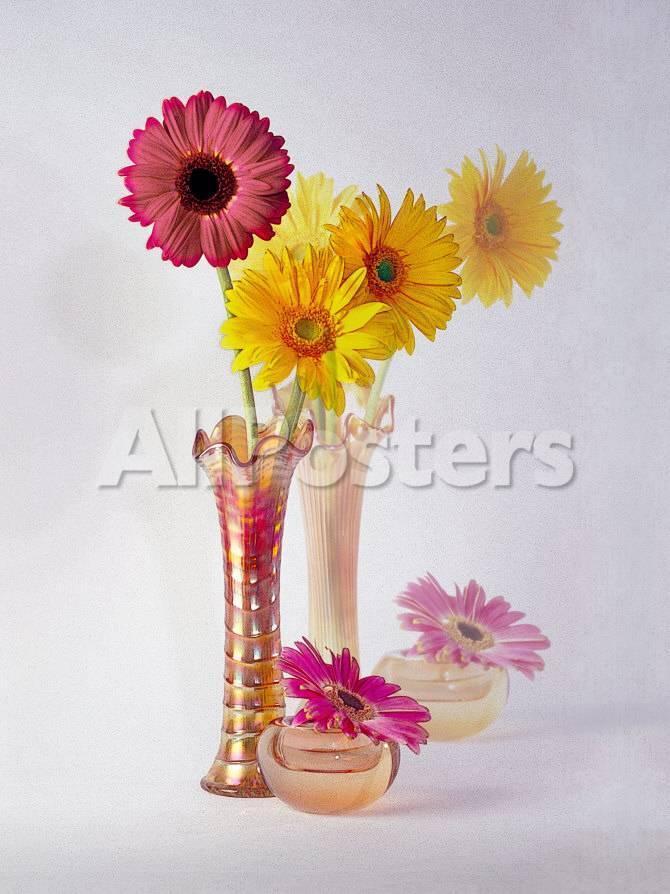 Gerbera Daisies In Antique Vase Photographic Print By Diane Miller