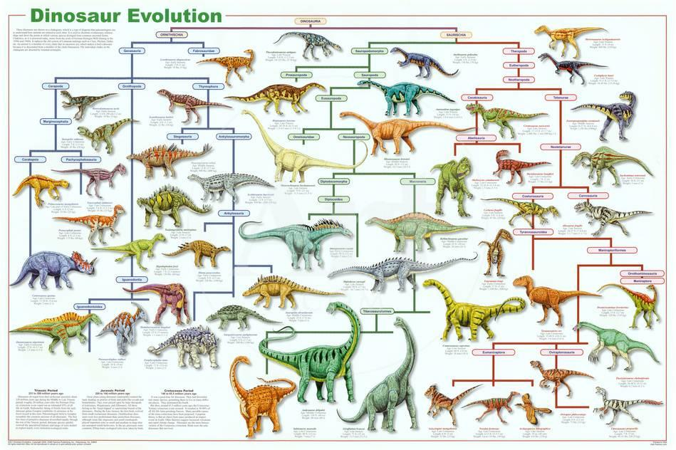 Dinosaur Evolution Educational Science Chart Poster At Allposters