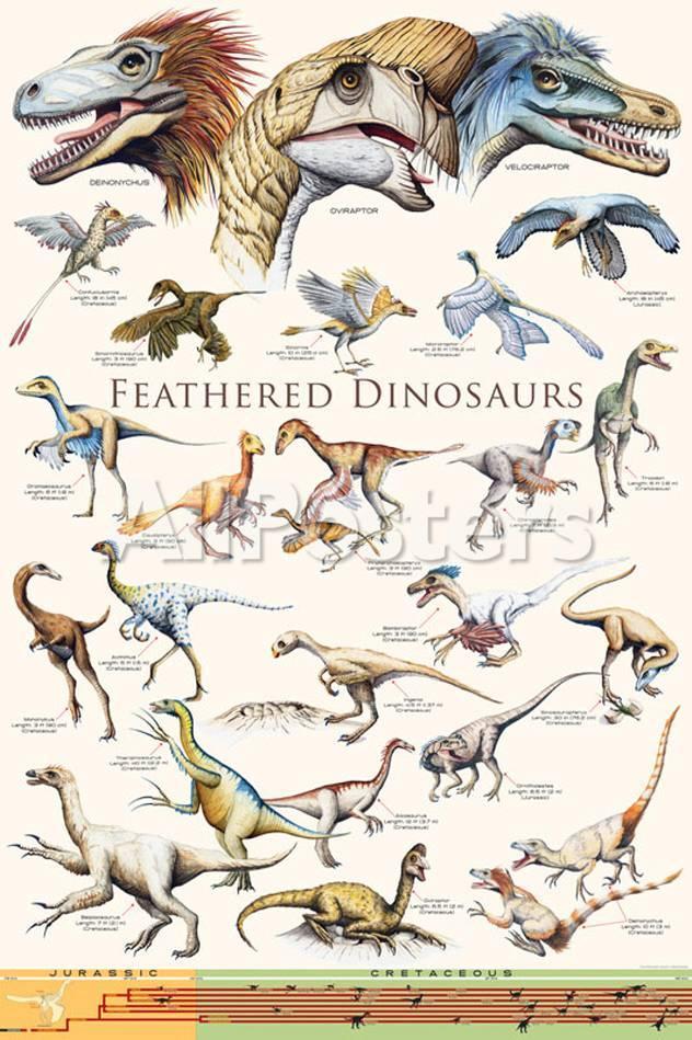 Dinosaurios con plumas II Fotografía en AllPosters.es