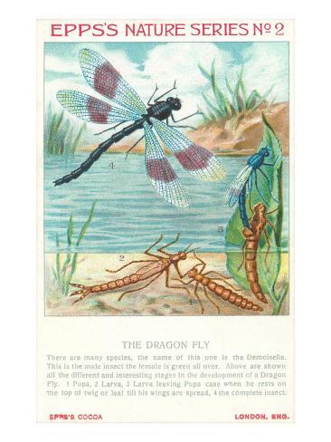 Disegni naturalistici di Epps, Libellule Stampa artistica