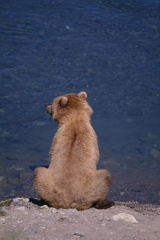 Grizzly Sitting on Rocky Beach Photographic Print