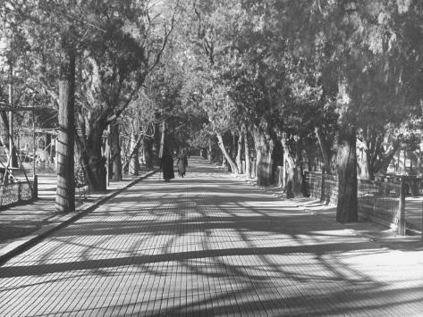 Avenue of Cypress in Central Park Photographic Print