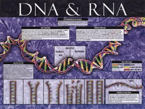 DNA & RNA Konstprint
