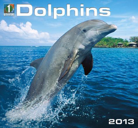 Dolphins - 2013 Calendar Calendars