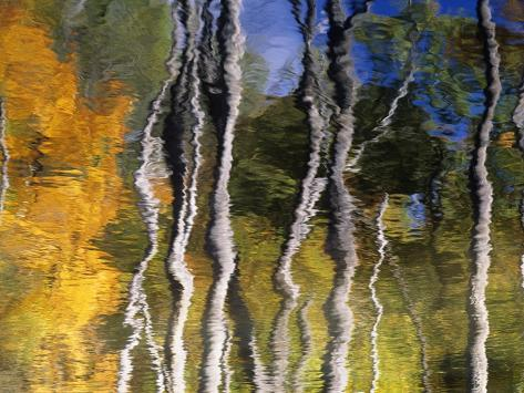 Autumn Reflections in Kilbear Provincial Park, Ontario, Canada Photographic Print