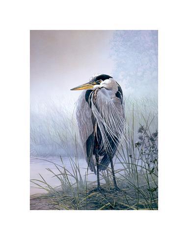 Brooding Heron Art Print