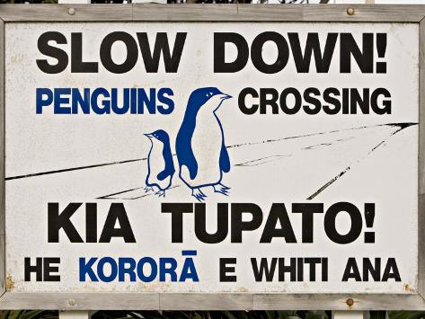 Sign Warning Drivers About Penguins in the Road, Wellington, North Island, New Zealand Photographic Print