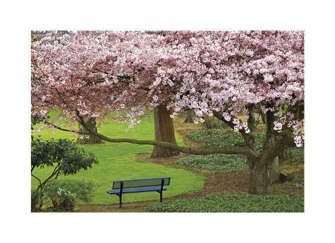Evergreen Park Giclée-vedos
