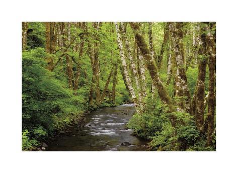 Forest Stream II Giclée-vedos