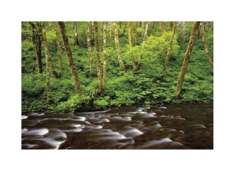 Forest Stream IV Giclée-vedos