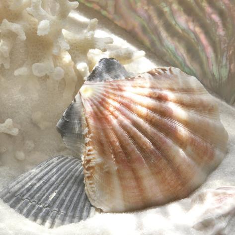 Coral Shell III Art Print