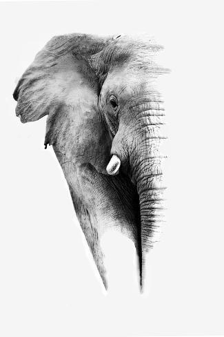 Artistic Black And White Elephant Póster