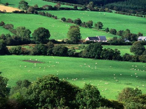The Fields and Farmhouses of County Cork, Ireland Photographic Print