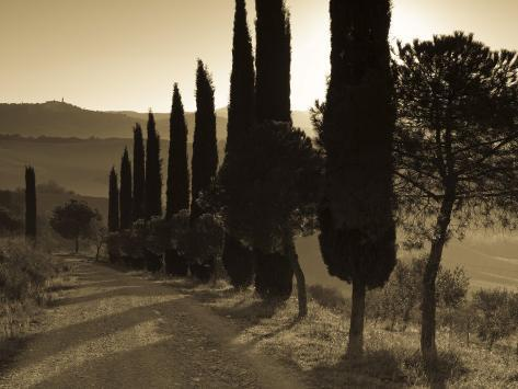 Country Road Towards Pienza, Val D' Orcia, Tuscany, Italy Photographic Print