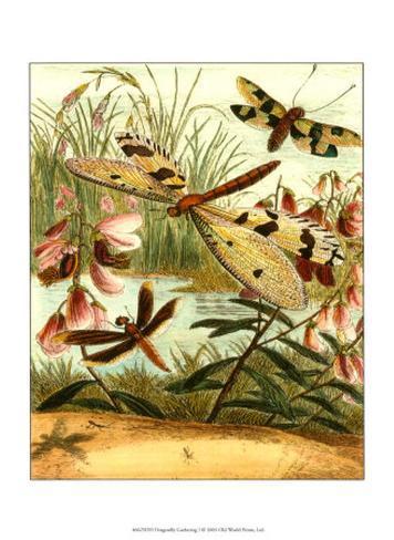 Dragonfly Gathering I Art Print