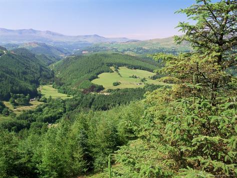 Coed Y Brennin Forest, Near Dolgellau, Snowdonia National Park, Gwynedd, Wales Photographic Print