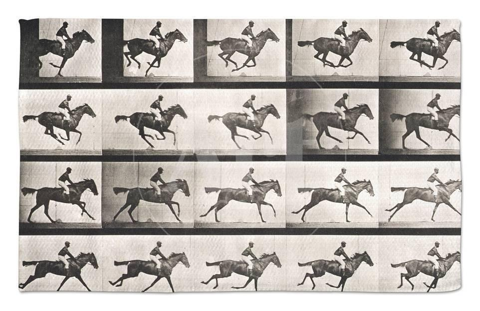 Jockey On A Galloping Horse Plate 627 From Animal Locomotion 1887 Rug By Eadweard Muybridge At AllPosters
