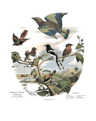 Asian Birds Art Print