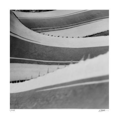 Agave Waves 1 Giclee Print