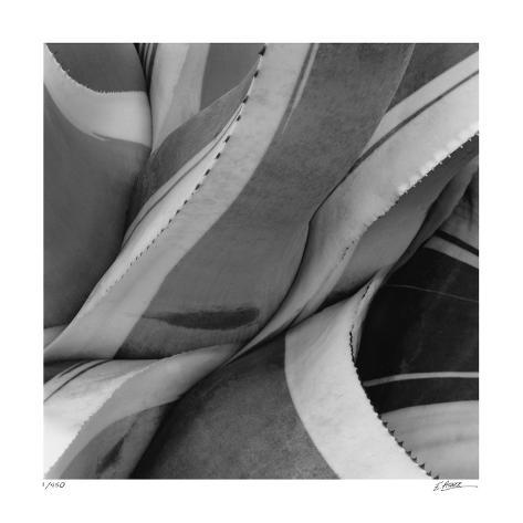 Agave Waves 2 Giclee Print