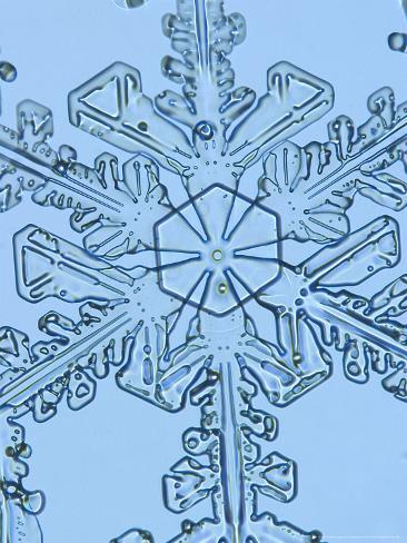 Snowflake, Close Up Photographic Print