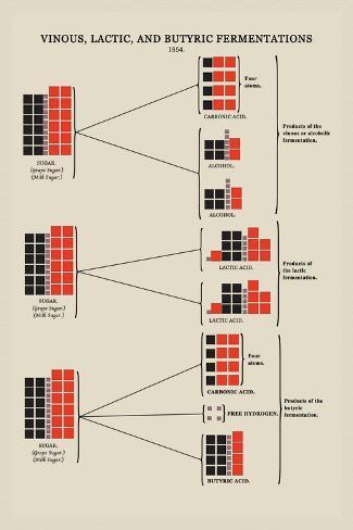 Vinous, Lactic, and Butyric Fermentations Seinätarra