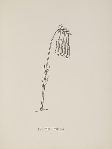 Guittara Pensilis. Illustration From Nonsense Botany by Edward Lear, Published in 1889. Giclee Print
