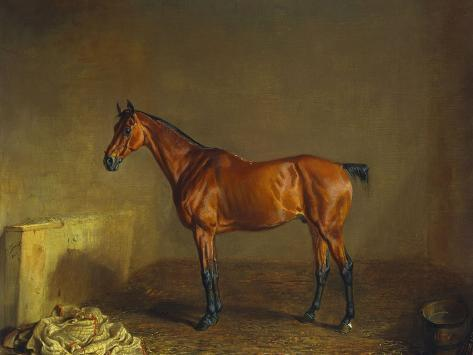 A Portrait of 'Marshall' a Bay Racehorse, in a Stall Stretched Canvas Print