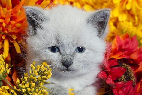 Cute Kitten and Flowers Photographic Print