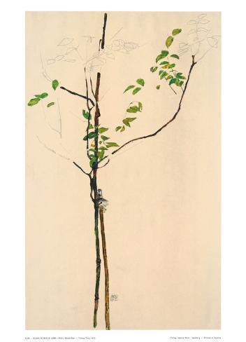 Young Tree Samlarprint